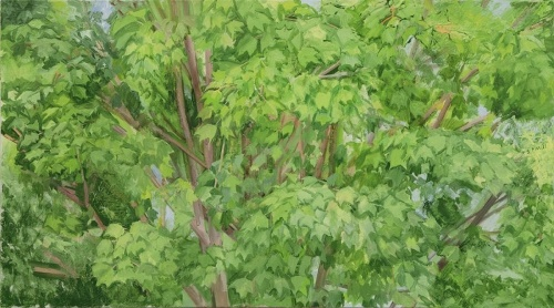 [Image: Sylvia Plimack Mangold: The Maple Tree (Summer), 2011, oil on linen, 20 by 36 inches, courtesy of the Norton Museum of Art]
